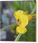 Yellow Bell Flower With Honeybee Wood Print