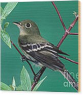 Yellow-bellied Flycatcher Wood Print
