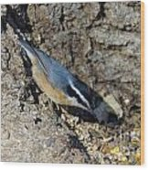 Yellow Bellied Nuthatch Wood Print