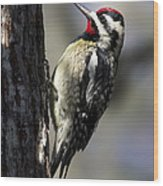 Yellow Bellied Sapsucker Wood Print