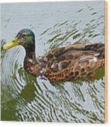 Yellow Billed Duck Wood Print