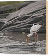 Yellow-billed Stork Fishing In River Wood Print