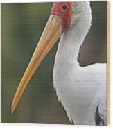 Yellow-billed Stork Wood Print