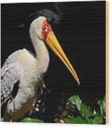 Yellow Billed Stork Peers At Camera Wood Print