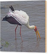 Yellow Billed Stork Wood Print