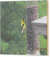Yellow Bird Feeding Wood Print