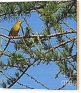 Yellow Bird In A Juniper Tree Wood Print
