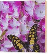 Yellow Black Butterfly On Hydrangea Wood Print