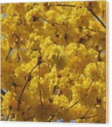 Yellow Blossoms Of A Tabebuia Tree Wood Print