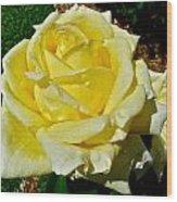 Yellow Bob Berry Rose Wood Print