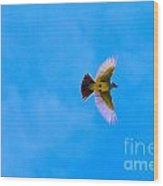 Yellow Breasted Blue Sky Wood Print