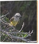 Yellow Breasted Kingbird Wood Print
