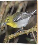 Yellow-breasted Vireo Wood Print