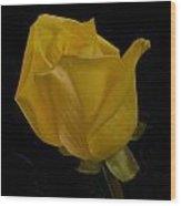 Yellow Bud Wood Print by Nancy Edwards