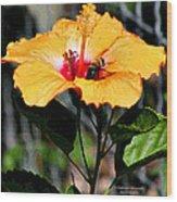 Yellow Bumble Bee Flower Wood Print