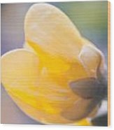 yellow buttercup flower II Wood Print
