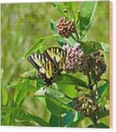 Yellow Butterflies Wood Print