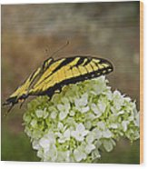 Yellow Butterfly 2 Wood Print
