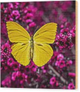 Yellow Butterfly Wood Print by Garry Gay