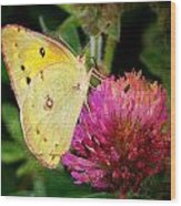 Yellow Butterfly On Pink Clover Wood Print