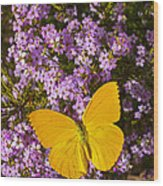 Yellow Butterfly On Pink Flowers Wood Print