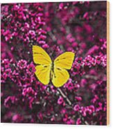 Yellow Butterfly On Red Flowering Bush Wood Print