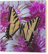 Yellow Butterfly Resting Wood Print