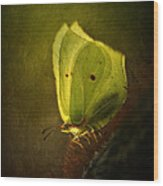 Yellow Butterfly Sitting On The Moss  Wood Print