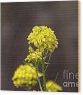 Yellow Button Wood Print
