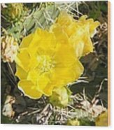 Yellow Cactus Blooms And Buds Wood Print