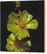 Yellow Cactus Flowers And Buds Wood Print