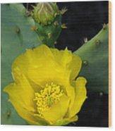 Yellow Cactus Wood Print