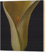 Yellow Calla Lily Wood Print