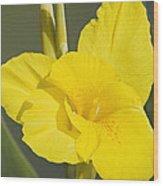Yellow Canna 2 Wood Print