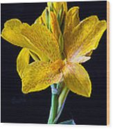 Yellow Canna Flower Wood Print