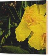 Yellow Canna Singapore Flower Wood Print