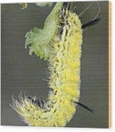Yellow Caterpillar 1 Wood Print