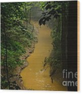 Hidden Cedar Sink Creek Wood Print