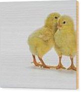Yellow Chicks. Baby Chickens Wood Print by Thomas Kitchin & Victoria Hurst