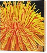 Yellow Chrysanthemum Painting Wood Print