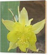 Yellow Colubine Wood Print