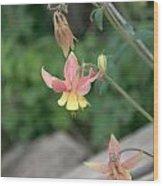 Yellow Columbine 2 Wood Print