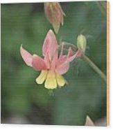 Yellow Columbine Wood Print