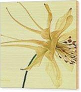 Yellow Columbine Study  Wood Print