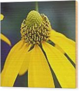 Yellow Cone Flower Rudbeckia Wood Print