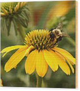 Yellow Coneflower And Bee Wood Print