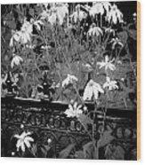Yellow Coneflowers Echinacea Wrought Iron Gate Bw Wood Print
