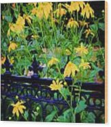 Yellow Coneflowers Echinacea Wrought Iron Gate Wood Print by Rich Franco