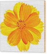 Yellow Cosmos Wood Print