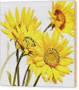 Yellow Country Wildflowers Wood Print